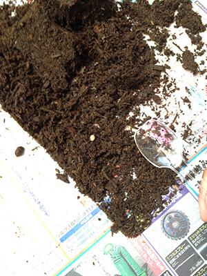 カブトムシのタマゴとスプーン_2786.jpg