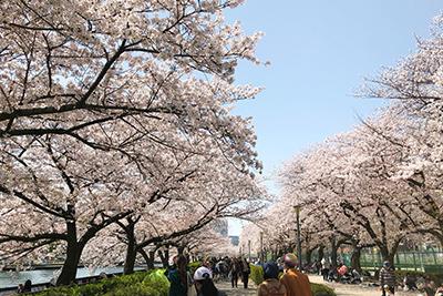 大川の桜_8719.jpg