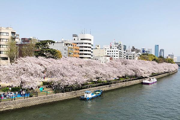 大川の桜_8722_600.jpg