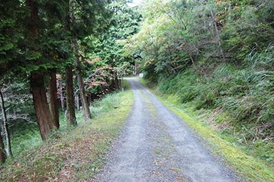 山崎施設_4867_区画サイトへの道2.JPG