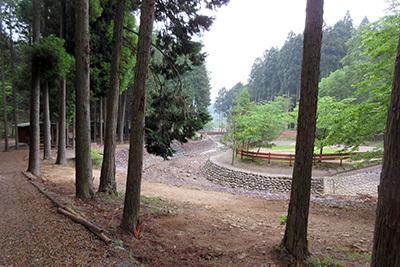 森のひととき1_道程2991.JPG
