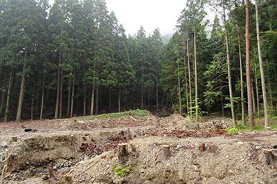 森のひととき3_水害のあと3031.JPG